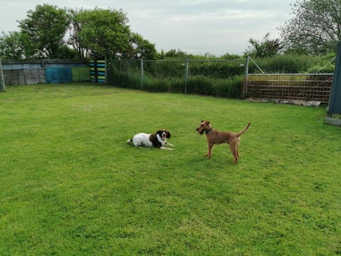 Billy and Foley's First Playday