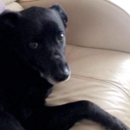 Lisa Ramsey Dog Boarder in Walsall , West Midlands