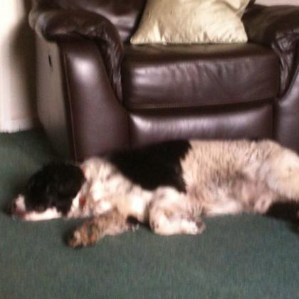 Steven Dalton Dog Boarder in Sutton Coldfield, West Midlands
