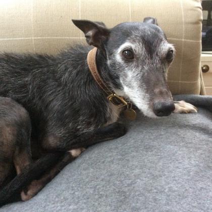 Sheila Werry   LN/000001469 Dog Boarder in Sutton Coldfield, West Midlands