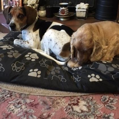 ELIZABETH MILNE Dog Boarder in Lichfield, Staffordshire