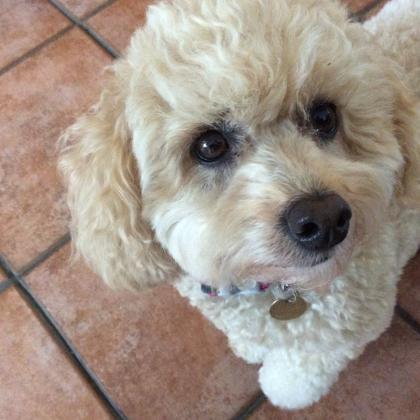 Sheila Werry   LN/000001469 Dog Boarder in Sutton Coldfield, West Midlands) ?>